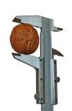 Καρύδι και παχυμετρικός διαβήτης Στοκ φωτογραφία με δικαίωμα ελεύθερης χρήσης