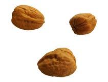 Καρύδι που τρώει Στοκ Φωτογραφία