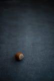 Καρύδι φουντουκιών που στηρίζεται στο σκοτεινό υπόβαθρο Στοκ Εικόνες