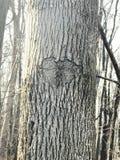 Καρδιά δέντρων Στοκ Φωτογραφία