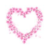 Καρδιά ανθών κερασιών Στοκ Φωτογραφίες