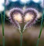 Καρδιά-διαμορφωμένα ρόδινα λουλούδια Κατά τη διάρκεια της ημέρας βαλεντίνων ` s Στοκ Εικόνα