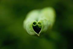 Καρδιά-διαμορφωμένα φύλλα Στοκ Εικόνα