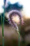 Καρδιά-διαμορφωμένη ημισέληνος των ρόδινων λουλουδιών Στοκ Εικόνες