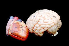 Καρδιά και εγκέφαλος Στοκ εικόνα με δικαίωμα ελεύθερης χρήσης