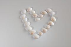 Καρδιά κοχυλιών θάλασσας Στοκ Εικόνες