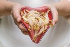 Καρδιά μπανανών Στοκ Εικόνα