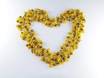 Καρδιά λουλουδιών της Cassia Στοκ φωτογραφίες με δικαίωμα ελεύθερης χρήσης