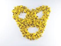 Καρδιά λουλουδιών της Cassia Στοκ Φωτογραφίες