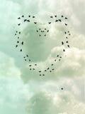 καρδιά πουλιών Στοκ Εικόνες