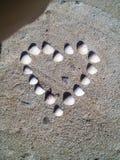 Καρδιά που γίνεται με τα θαλασσινά κοχύλια Στοκ Φωτογραφία