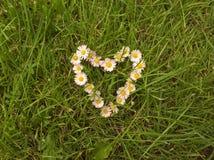 Καρδιά που τακτοποιείται με τις μαργαρίτες Στοκ Εικόνες
