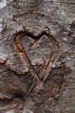 Καρδιά που χαράζεται στο δέντρο Στοκ Φωτογραφίες