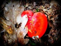 Καρδιά στο δάσος Στοκ Εικόνες