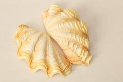 Καρδιά της Shell μαλακίων Στοκ Φωτογραφία
