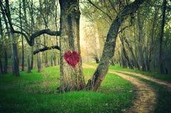 Καρδιά του δάσους Στοκ εικόνα με δικαίωμα ελεύθερης χρήσης