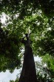 Καρδιά του τροπικού τροπικού δάσους της Αφρικής, Κονγκό Στοκ φωτογραφία με δικαίωμα ελεύθερης χρήσης