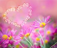 Καρδιά των πεταλούδων σε ένα ρόδινο υπόβαθρο με τα χρυσάνθεμα Στοκ Εικόνες