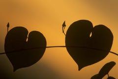 Καρδιά δύο σε ένα ηλιοβασίλεμα στοκ φωτογραφίες