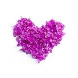 Καρδιά Bougainvillea Στοκ Φωτογραφίες