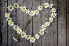 Καρδιά chamomile Στοκ Εικόνες