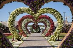 Καρδιές κήπων λουλουδιών, κήπος θαύματος του Ντουμπάι Στοκ Εικόνες