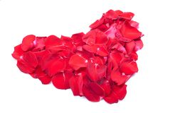 Καρδιές και λουλούδια στο βαλεντίνο που απομονώνεται στο άσπρο πνεύμα υποβάθρου Στοκ εικόνα με δικαίωμα ελεύθερης χρήσης