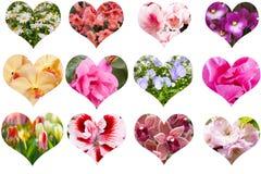 καρδιές που τίθενται Στοκ Φωτογραφίες