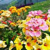 Κασμίρ με την ομορφιά του Στοκ Εικόνες