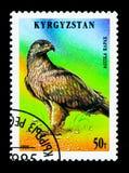 Καστανόξανθος αετός (Aquila rapax), πουλιά του θηράματος serie, circa 1995 Στοκ Εικόνες