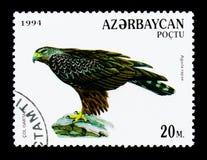 Καστανόξανθος αετός (Aquila rapax), πουλιά του θηράματος serie, circa 1994 Στοκ εικόνα με δικαίωμα ελεύθερης χρήσης