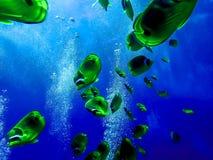 Κατάδυση σε ένα σχολείο των κίτρινων ψαριών πεταλούδων ρακούν στοκ εικόνες