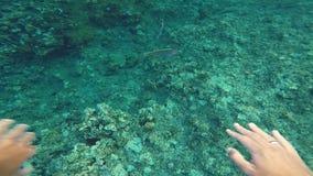 κατάδυση υποβρύχια Ερυθρά Θάλασσα Αίγυπτος απόθεμα βίντεο