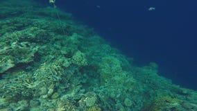 Κατάδυση υποβρύχια στη Ερυθρά Θάλασσα στην Αίγυπτο φιλμ μικρού μήκους