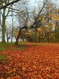 Κατάπληξη φθινοπώρου Στοκ φωτογραφίες με δικαίωμα ελεύθερης χρήσης