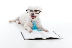 κατάρτιση κουταβιών εκπαίδευσης σκυλιών Στοκ Φωτογραφία