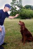 Κατάρτιση σκυλιών Λέσχη κατάρτισης Treining με τον ιρλανδικό ρυθμιστή στοκ εικόνα με δικαίωμα ελεύθερης χρήσης
