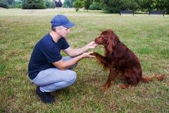 Κατάρτιση σκυλιών Λέσχη κατάρτισης Treining με τον ιρλανδικό ρυθμιστή στοκ εικόνα