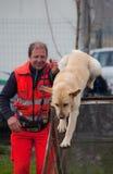 κατάρτιση σκυλιών Στοκ Εικόνα
