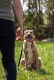 Κατάρτιση σκυλιών, σχολείο για τα σκυλιά Στοκ φωτογραφία με δικαίωμα ελεύθερης χρήσης