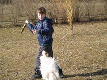 Κατάρτιση σκυλιών Στοκ Φωτογραφία