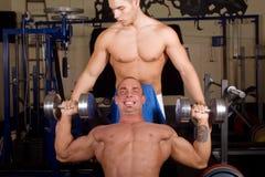 κατάρτιση bodybuilders στοκ εικόνες με δικαίωμα ελεύθερης χρήσης