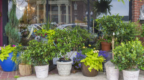 κατάστημα απεικόνισης λουλουδιών smellcomp Στοκ εικόνες με δικαίωμα ελεύθερης χρήσης