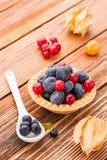 Κατάταξη fruity tarts Στοκ Φωτογραφία