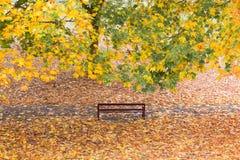 Κατάλληλος πάγκος σε ένα πάρκο με τα δέντρα φθινοπώρου στοκ φωτογραφία