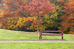 Κατάλληλος πάγκος σε ένα πάρκο με τα δέντρα φθινοπώρου στοκ εικόνα