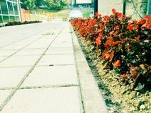 Κατά μήκος του τρόπου τα λουλούδια στοκ εικόνα με δικαίωμα ελεύθερης χρήσης
