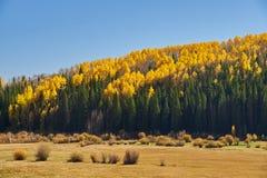 κατά μήκος του φθινοπώρο&upsi στοκ φωτογραφία με δικαίωμα ελεύθερης χρήσης