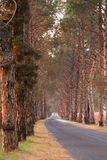 κατά μήκος των οδικών δέντρ&omeg στοκ εικόνες