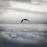 Κατά την πτήση στα σύννεφα Στοκ Φωτογραφίες
